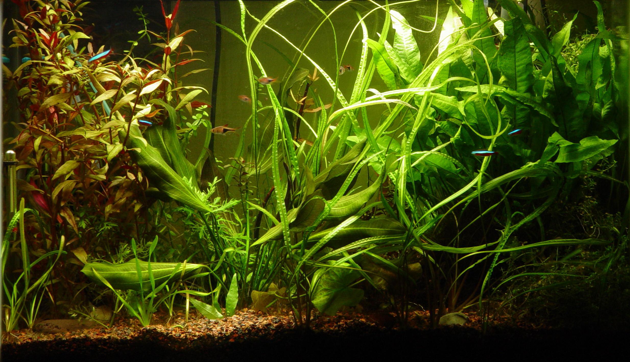 Aquarium Hintergrund Ausdrucken – Zuhause Image Ideas
